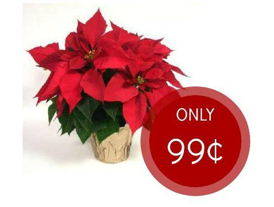 Lowes Live Christmas Trees Price