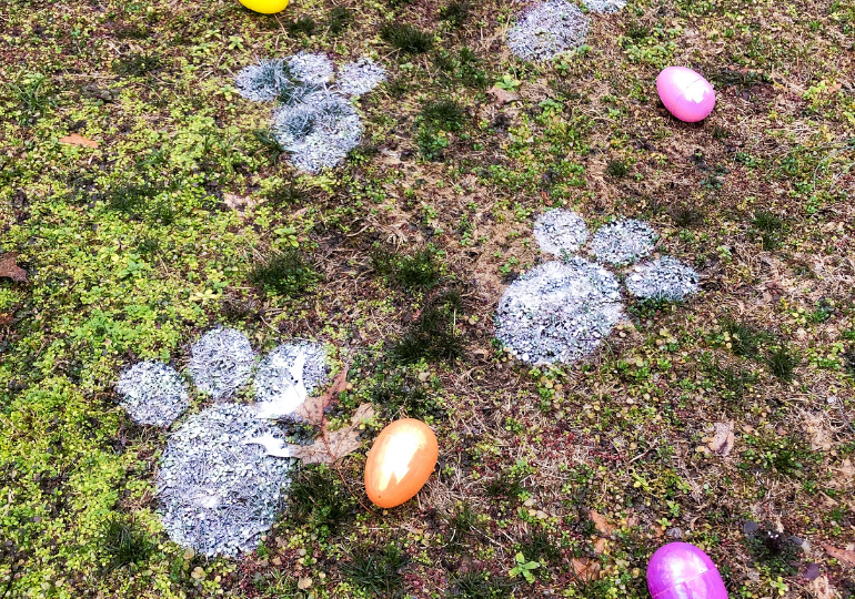 Easter bunny track on grass with eggs around it
