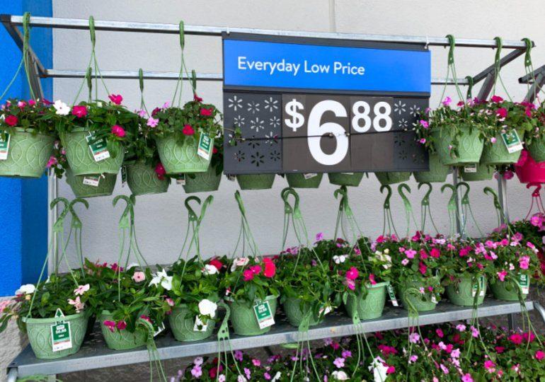 Walmart Live Plants